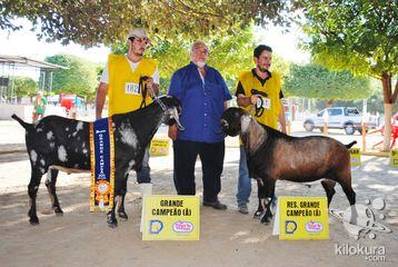 No terceiro dia de evento aconteceu a 3ª e 4º Ordenha do Concurso Leiteiro, o julgamento dos animais, shopping do bovino leiteiro (raças gir e girolando) com vendas facilitadas e mais a noite as Olímpias Rurais.